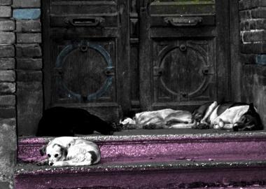 ქუჩის ცხოველთან ქცევის წესები