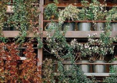 კედლის ვერტიკალური გამწვანება თბილისში
