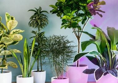 ინტერიერის მცენარეები - ეკონომიკის ახალი, მზარდი სეგმენტი