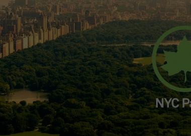 ნიუ-იორკში მდგარი ყველა ხე რუკაზე აღრიცხეს
