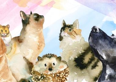 რჩევები და მოვლის წესები შინაური ცხოველებისთვის სოციალური ქსელებიდან