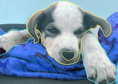 რატომაა მიზანშეწონილი შინაური ცხოველების კასტრაცია - ინფორმაცია ექიმი-ვეტერინარისგან