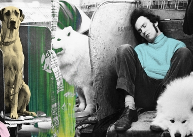 """""""1961-1978 წლების ძაღლების გამოფენები"""" - ბრიტანეთში ახალი ფოტოალბომი გამოსცეს"""