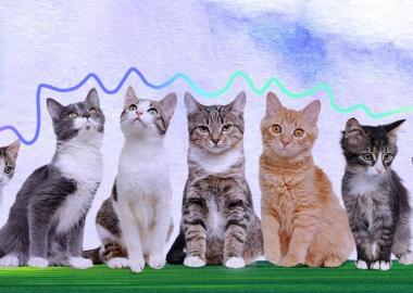 ვეტერინარული კლინიკები, რომლებსაც ცხოველების დამცველები ენდობიან