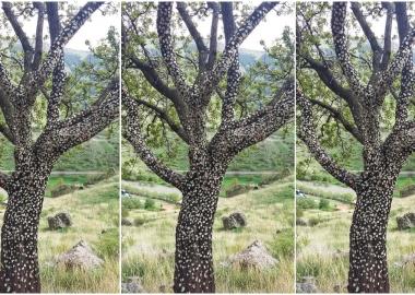 """საღეჭი რეზინების """"ნატვრის ხე"""" ვარძიასთან - დღის ფოტო"""