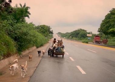 კაცი, რომელიც მექსიკაში მიუსაფარ ძაღლებს ურიკით დაატარებს