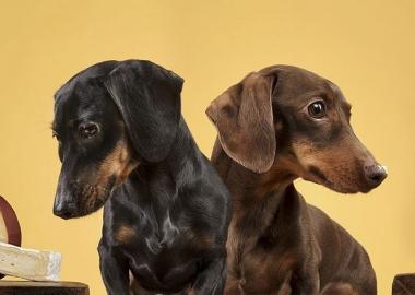 ძაღლების რეაქცია საჭმელზე - სახალისო ფოტოები, რომლებიც გულგრილს არ დაგტოვებთ