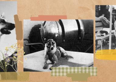 კუპატა, ჰაჩიკო, ლაიკა და სხვა ძაღლები, რომლებიც მსოფლიომ გაიცნო