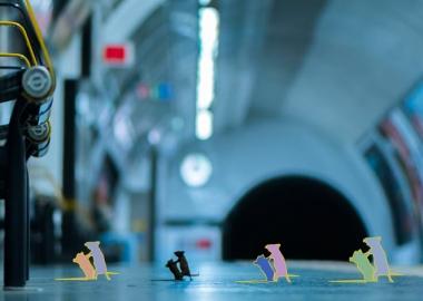 თაგვების ჩხუბი მეტროში და ველური ბუნების ფოტოგრაფის სხვა გამორჩეული ნამუშევრები