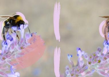 სითბური ტალღები ფუტკრებს ანადგურებენ
