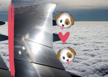 სამგზავრო თვითმფრინავის კანადელმა პილოტმა ძაღლის გადასარჩენად რეისი შეწყვიტა