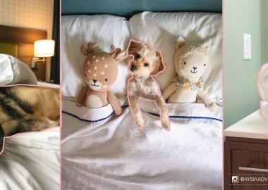 სასტუმროში ყოფნის პერიოდში სტუმრებს საშუალება აქვთ ძაღლებზე იზრუნონ