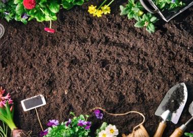 4 რჩევა ბაღის მცენარეების მოსავლელად - ფლორისტი ირინა ღარიბაშვილი