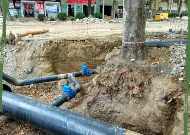 რა საფრთხე ემუქრებათ ხეებს და ადამიანებს ქუჩის სამუშაოების ჩატარებისას - რჩევები ნატა ფერაძისგან