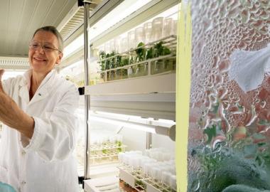 ავსტრიის ლაბორატორიაში ციმბირში ნაპოვნი 32000 წლის თესლისგან მცენარე გაზარდეს