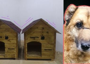 ქალაქში მიუსაფარი ცხოველებისთვის სახლები დაიდგა - Apple City-ს ინიციატივა